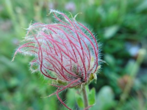 Fleur (inconnue)